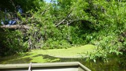 nombreux-arbres-dans-la-riviere